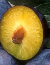 plum thumb